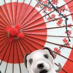 """J-Wellness"": COVID-19 puts Japan's unique culture of wellness in the spotlight"